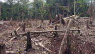 (Threat to Democracy, slash and burn agriculture in the Amazon, Flickr creative commons)