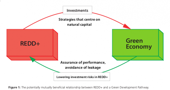 REDD+ and a Green Economy: Opportunities for a mutually supportive relationship (UN REDD)